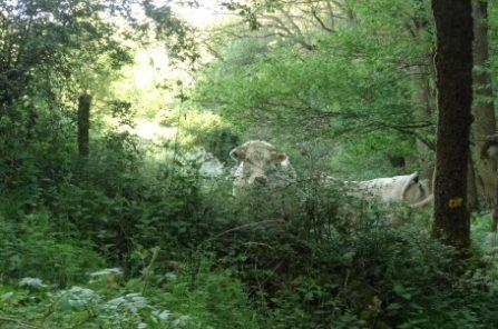 Koe zorgt bij mens voor relativering en rust